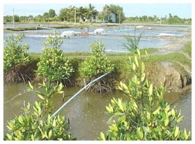 FAO Fisheries amp Aquaculture National Aquaculture Sector