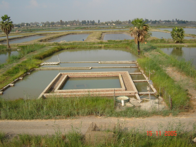 Pond Construction Trending Now Related Feeds