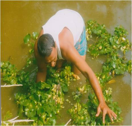 Bangladesh Aquaculture Fish Pond Preparation Deweeding
