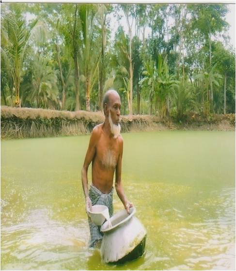 Bangladesh aquaculture pond preparation liming fish for Fish pond preparation