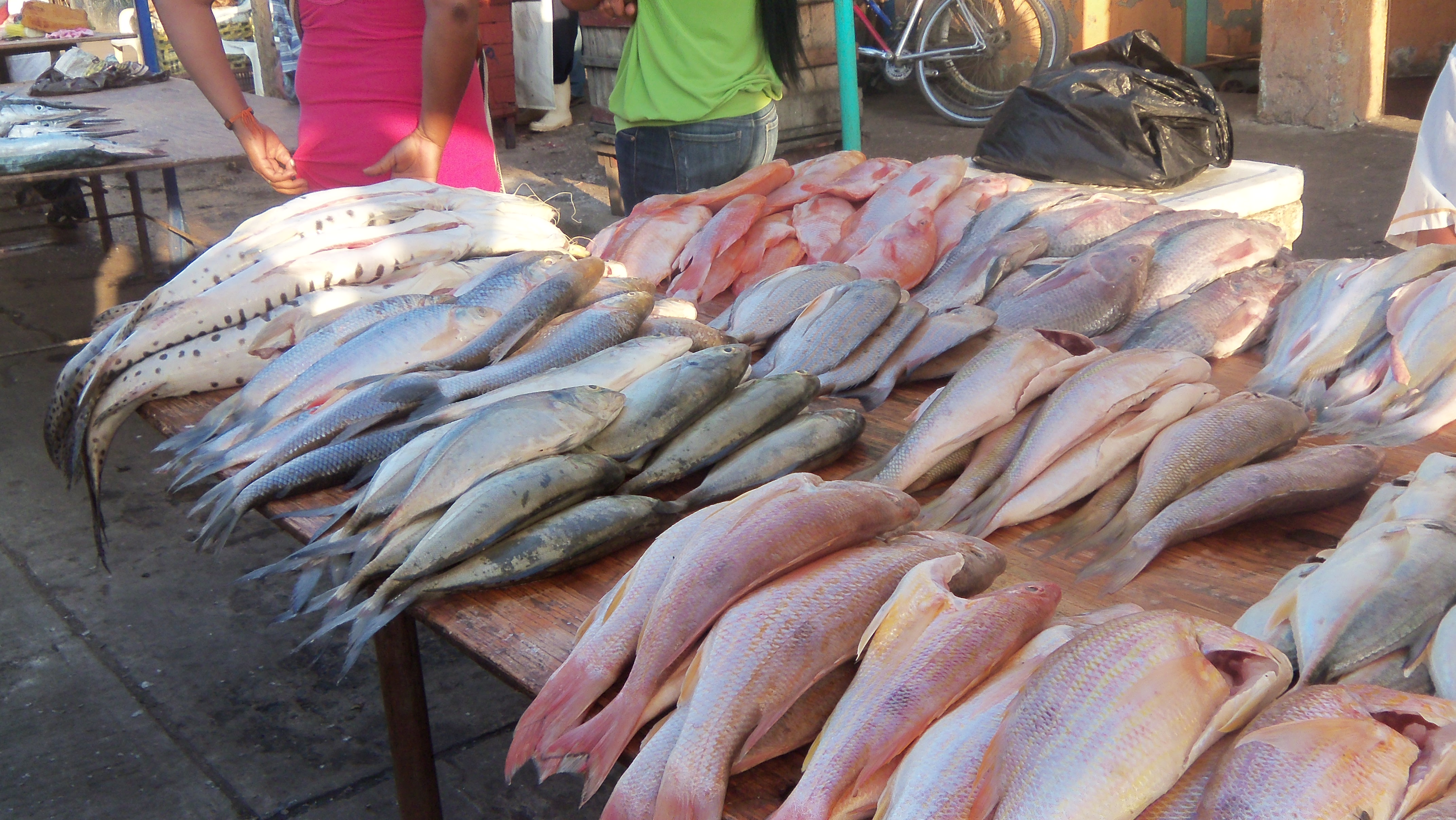 Displays in fish retail shops in the public market of for Sierra fish in english