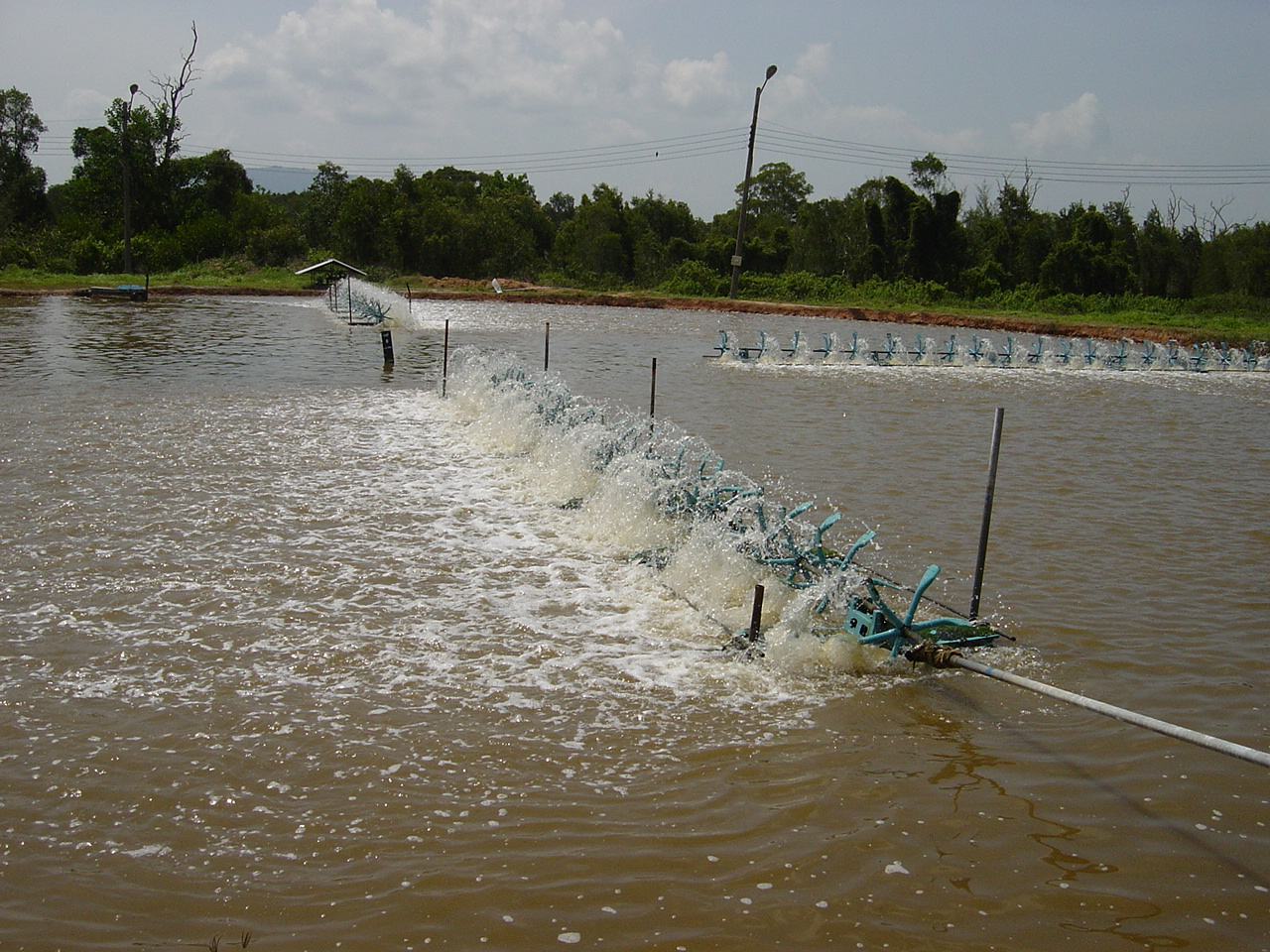 Aerating shrimp ponds in thailand fish consulting group for Preparing pond water for fish