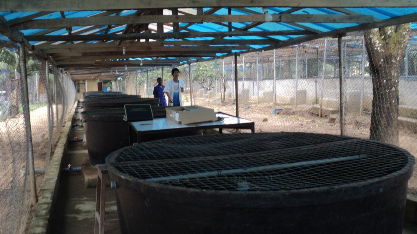 Fish farming tanks for Fish pond design in nigeria