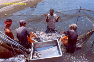 Objectives of aquaculture in Panama
