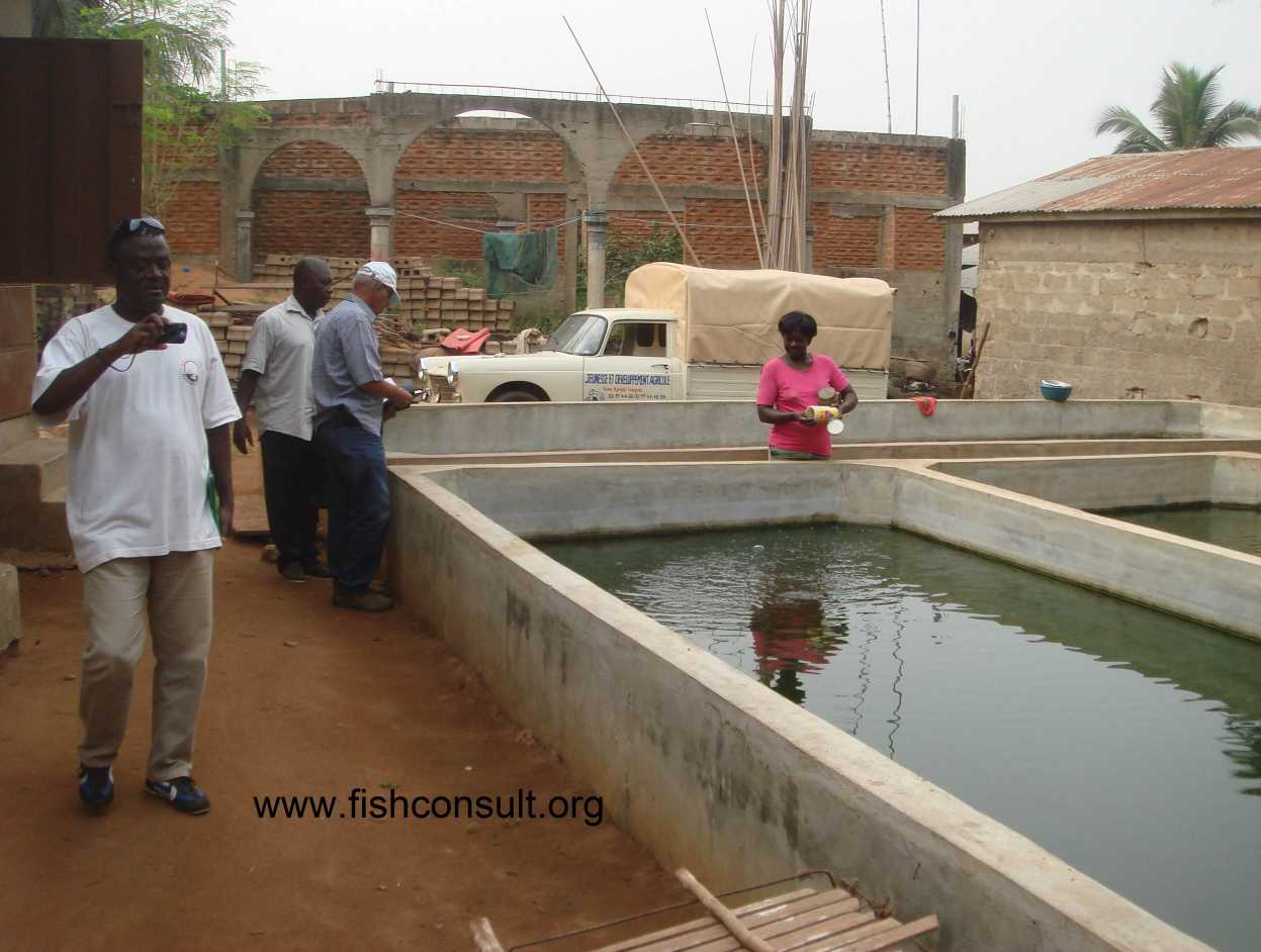 Features of fish farming in benin facilities and species for Fish pond design in nigeria