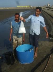 Shrimp pond preparation (01) chlorine