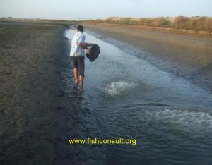 Shrimp pond preparation (02) chlorine