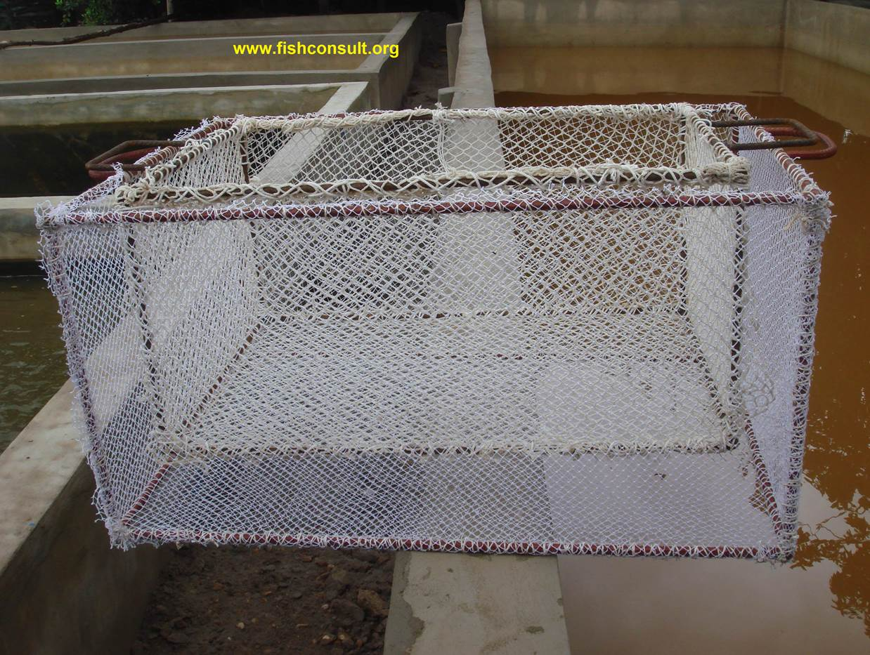 Constructing a simple net grader for tilapia or catfish for Is tilapia a bottom feeder fish