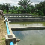 Use of concrete tanks in the reproduction of Nile tilapia in Benin