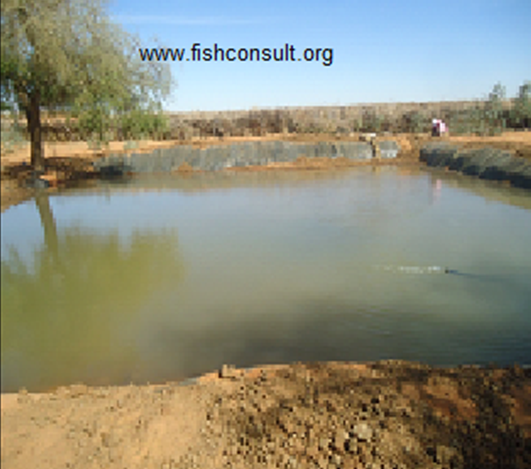 Desert aquaculture in fouja village north kordofan sudan for Fish pond management