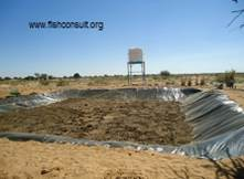 Desert aquaculture in fouja village north kordofan sudan for Fish pond preparation