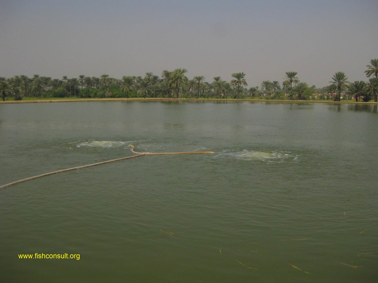 Aerating Earthen Fish Ponds Using Tubing Technology In