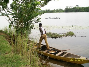 Cage farming of Nile tilapia in Lake Volta (Ghana) 02