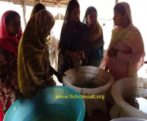 Promoting aquaculture in Pakistan (03)