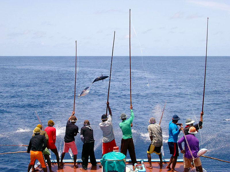 Pole and line tuna fishing in the maldives fish for Tuna fishing pole