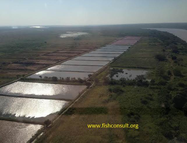 Description And Management Of A Fish Farm In Bela Vista
