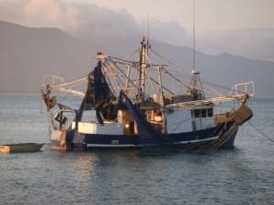 Prawn trawling in Queensland (Australia)