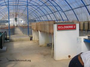 Intensive tilapia culture in Morocco (02)