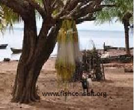 Artisanal fishery in Lakes (Benin) 02