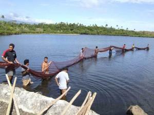 Lake harvest of tilapia in Samoa islands