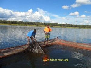 Tilapia cage culture in Zambia (01)