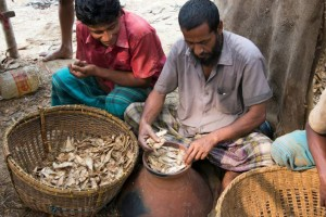 Fish fermentation in Bangladesh (01)