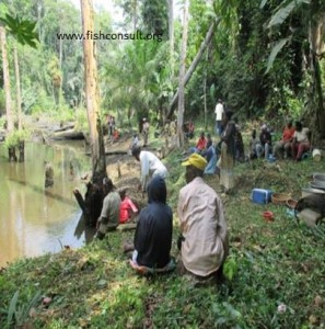 Fish harvest in Cameroon (01)