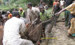 Fish harvest in Cameroon (02)
