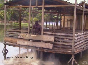 Integrated pigs into fish farming in Cameroon (01)