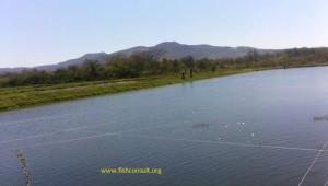 Tilapia aquaculture in El Salvador