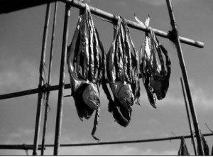 Tuna drying in Bangladesh