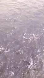 Desert recirculating tilapia farming in Egypt