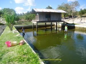 Chicken fish farming in Tanzania