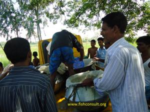 stock-enhancement-of-riverine-fish-in-bangladesh-01