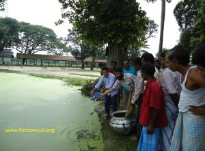 stock-enhancement-of-riverine-fish-in-bangladesh-02