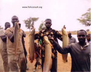 culture-african-arowana-in-burkina-faso-02